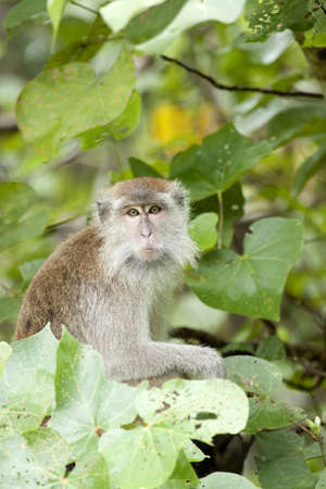 Female Monkey Stock Photo