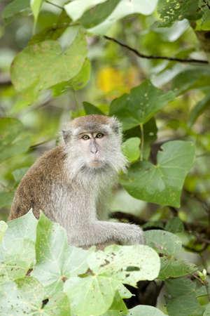 Female Monkey Stock Photo