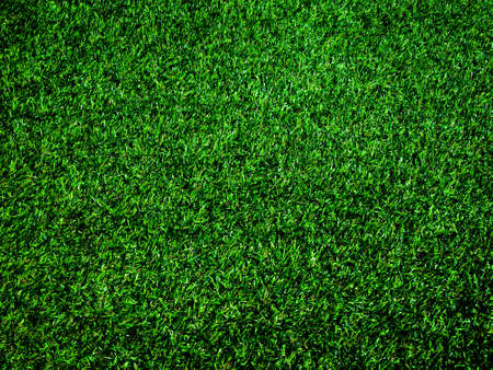 Top view of green grass texture background. Element of design.