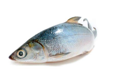 Fresh Sea-Bass Isolated photo