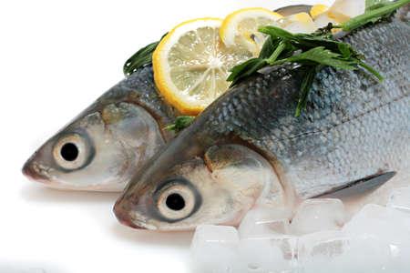 fish store: Fresco lubina en primer plano de hielo