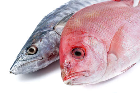 Fresh Mackerel and Red Snapper Close-Up photo