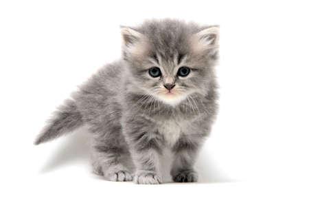 Cute Kitten in White Background Stock Photo