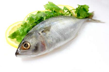 sardinas: Caballa con lim?n Foto de archivo