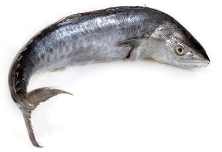 민물의: 흰색 배경에 신선한 고등어