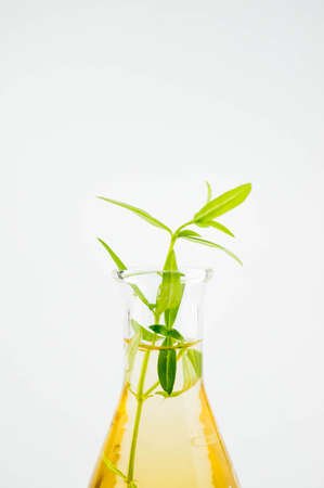 business products: organic lab test, plant base