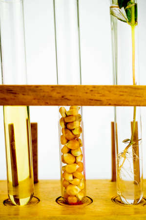 Agriculture concept, Corn generated ethanol bio-fuel with test tubes on white background