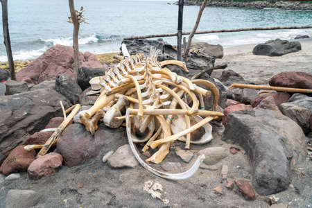 Skeleton from dolphin or whale at Lamalera, Nusa Tenggara, Indonesia. Lamalera is home of the Traditional Whale Hunting people Zdjęcie Seryjne