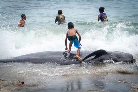 LAMALERA, NUSA TENGGARA, INDONESIA - DEC 13, 2018: Little kids playing with the captured pilot whale near the shore at Lamalera Indonesia Publikacyjne