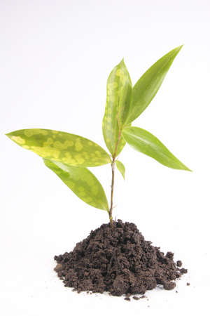 seed bed: young plant Stock Photo