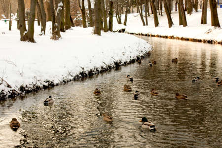 Winter scene of a lake,birds and forest photo