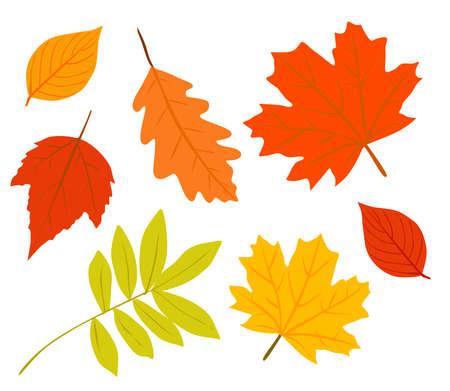 Raccolta di vettore delle foglie di autunno. Vettoriali