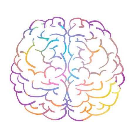 Left and right hemisphere of human brain