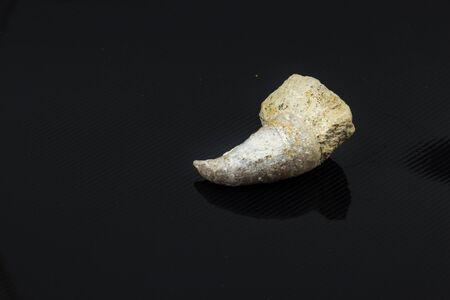 petrified: Petrified shellfish