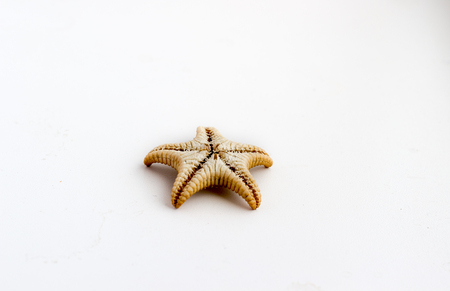 Beautiful starfish shot close on a white background, from a private collection of sea and ocean shells Stock Photo