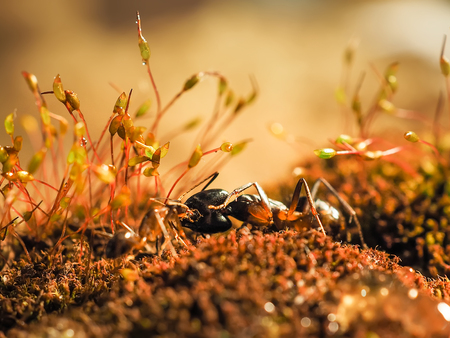 two ants kisiing on moss at sunsett shoot close Stock Photo