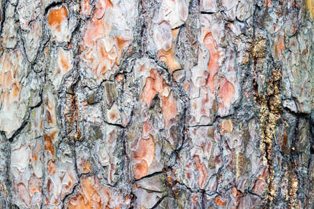 Closeup Textured natural background Bark of an old tree