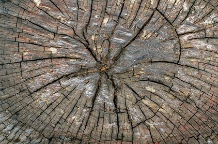 Closeup cross section of wood photo