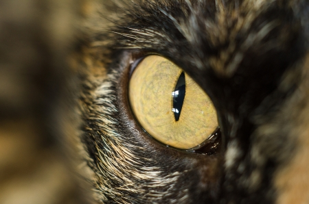 cat eye close up wild photo