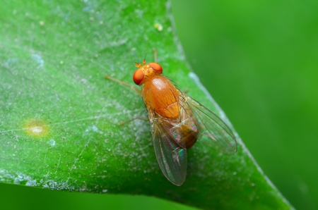 fly on green leaf photo