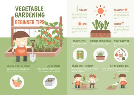 野菜初心者のヒントを栽培する方法についての子供のためのインフォ グラフィック  イラスト・ベクター素材