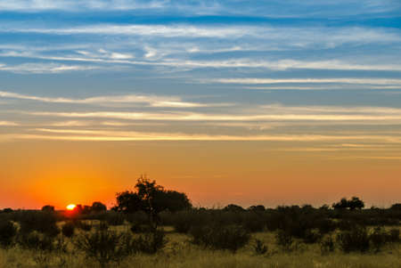 Sunset on the red Kalahari desert with a blue and orange sky in southern Namibia, Africa