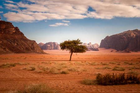 Samotne drzewo na środku pustyni Wadi Rum w Jordanii na Bliskim Wschodzie