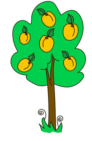 apricot tree: apricot, tree, wood, green, yellow, nature, fruit, garden, fruiter