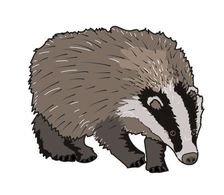 burrow: badger, gray, brock, mammal, animal, nature, burrow Illustration