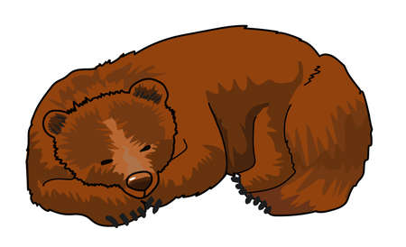 Sleeping brown bear on a white background. Stock Illustratie