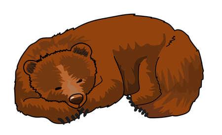 Ours brun dormant sur un fond blanc.