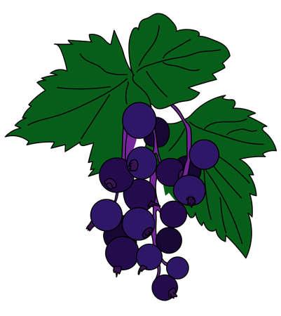 black, currant, berry, plant, bush, shrub, biology, leaf Иллюстрация