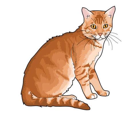 Katze, pussycat, Dame-Katze, Kater, er-Katze, Kater, rote Katze, Haustier