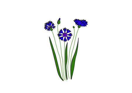 centaurée doux bleu sur un fond blanc.