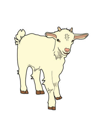 Goatling milk color with small horns on a white background. Illustration