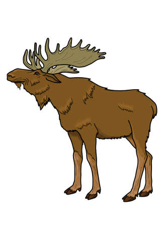 hoofs: Large brown elk with branched antlers on a white background.
