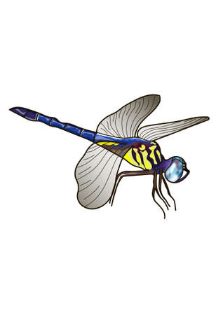 adder: Flying dragonfly on a white background. Gray wings. Illustration