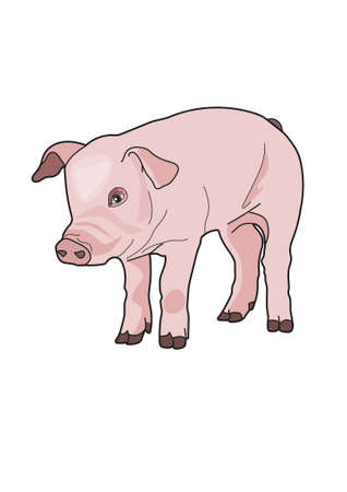 pigling: The pink piggy on a white background. Illustration
