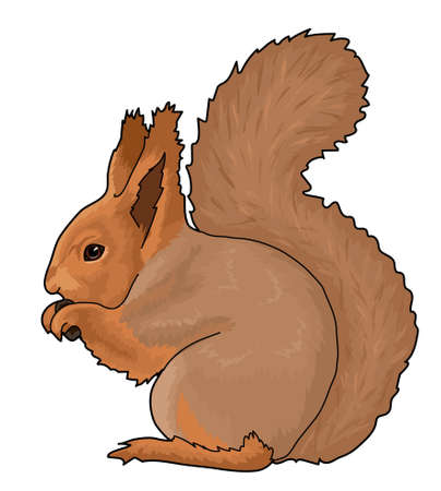 The fluffy red squirrel is gnawing nuts. Illustration