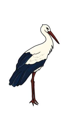The tall stork with black and white plumage on a white background. Illustration