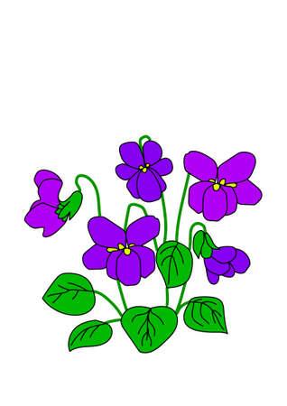 Violets violets délicats sur fond blanc.