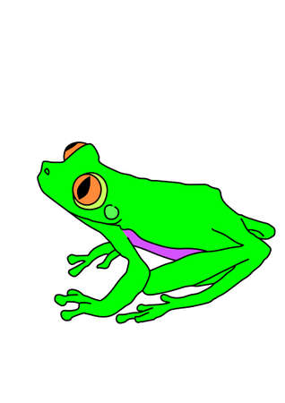 webbed legs: Green frog with long hind legs on a white background.