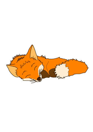 Sleeping red little fox on a white background. Illustration