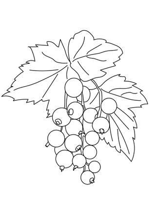 currant: Graphic image of a black currant branches.