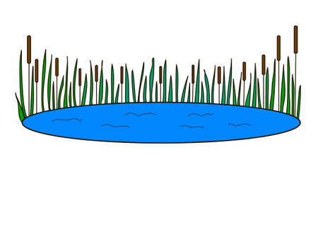 The blue lake with green reeds on a white background.