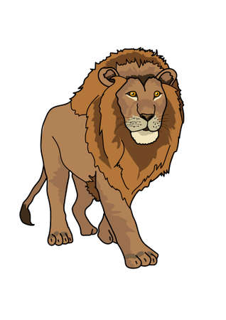 The large lion tawny-colored is walking on a white background. Illustration