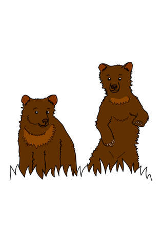 Two brown bear on a white background. Illustration