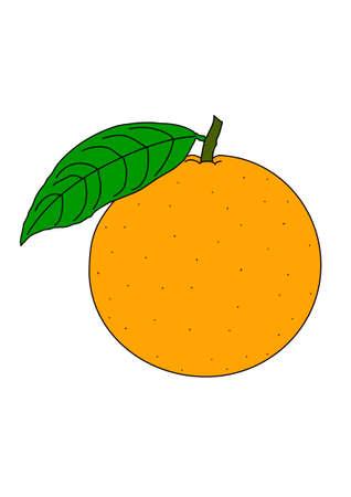 The ripe yellow orange on a white background. Illustration
