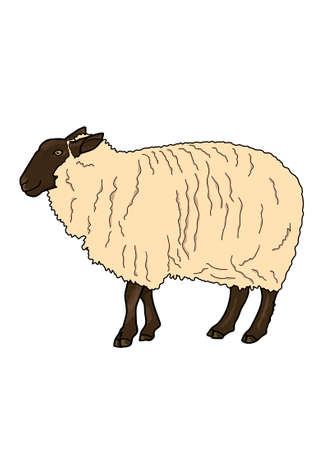 curls: Beige sheep with curls on a white background.