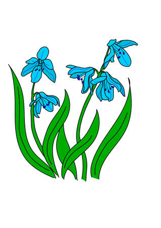 white: The turquoise snowdrop on a white background. Illustration